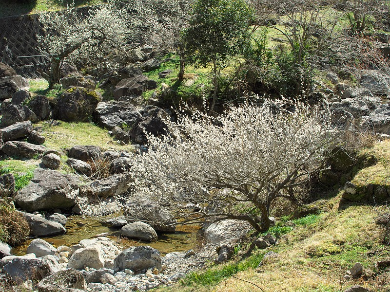 川売(かおれ) 梅の里