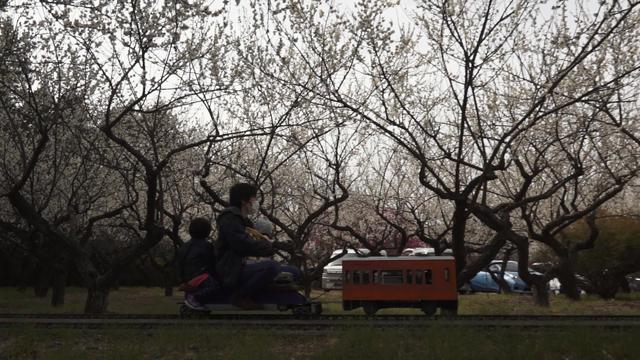 梅の花の中を走る