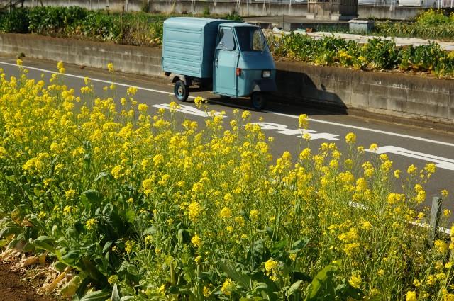 菜の花とベスパカー