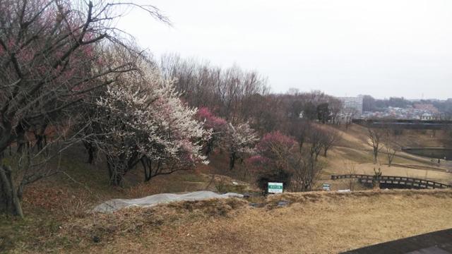 春が来ました殿ヶ谷公園