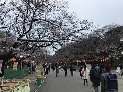 2019の五分咲き上野