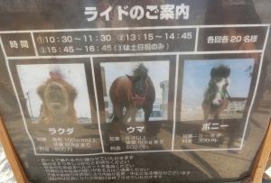 神戸どうぶつ後25-1