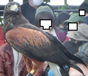 神戸動物イベ31