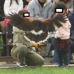 神戸動物イベ32