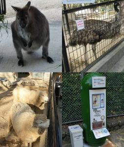 五月山動物3