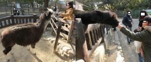 五月山動物4