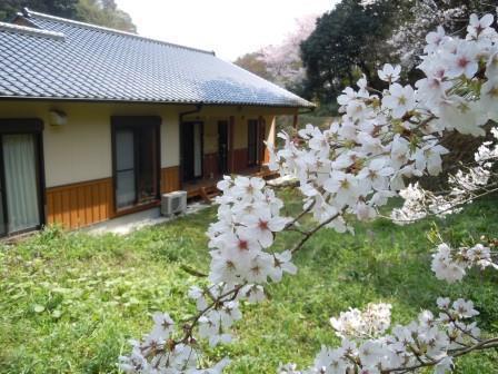 桜4(2019-03-30)