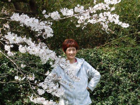 桜と和子さん2(2019-03-29)