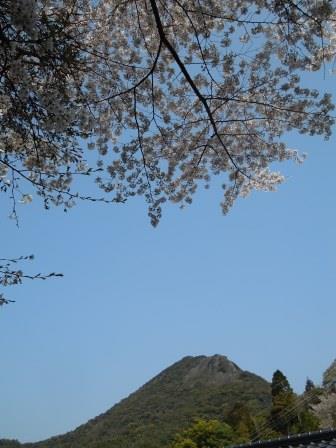 桜9(2019-03-30)