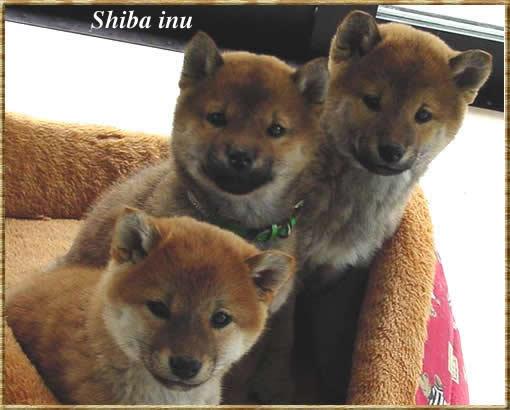 shiraishiba04051.jpg