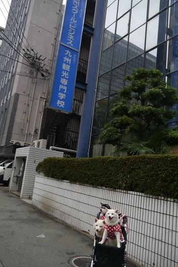 オブ ビジネス スクール 九州