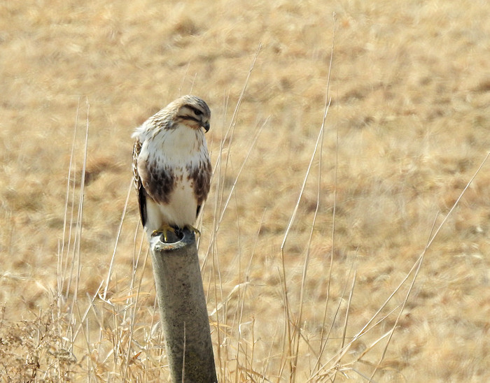 名残惜しく冬の鳥