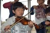 バイオリン (29)