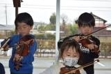 バイオリン (36)