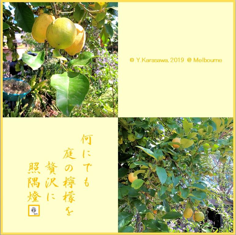 190306レモンLRG