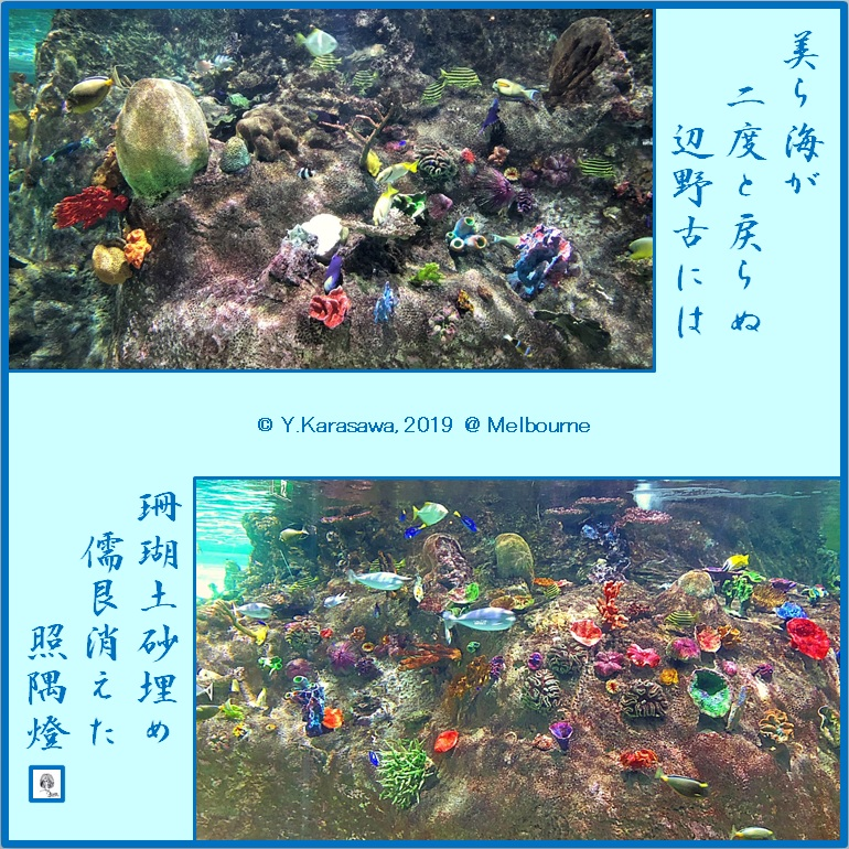 190326水族館の珊瑚礁LRG