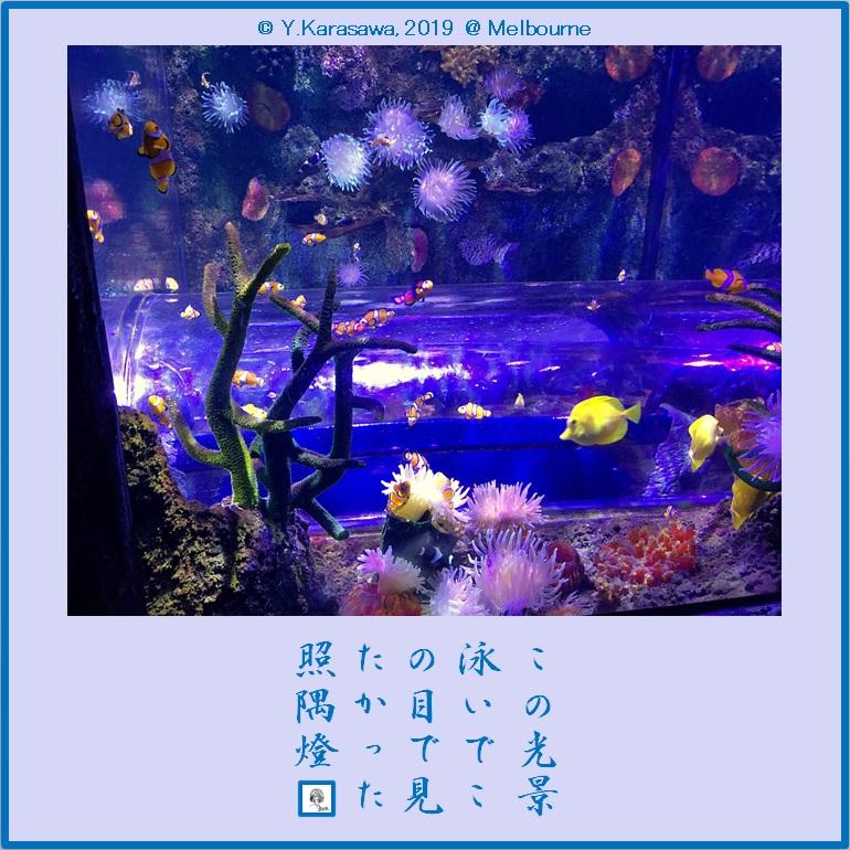 190327珊瑚礁@メルボルン水族館LRG