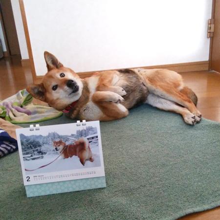 はなちゃん(青森県)