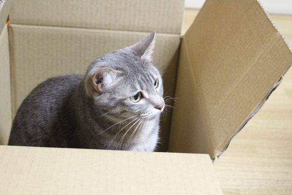 猫フードをネットで購入した