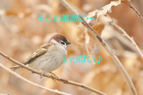 020_20190310220349dfb.jpg