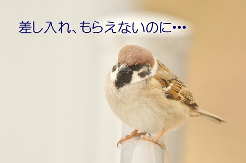 170_20190310220411c8b.jpg