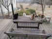 朝ご飯を待つ猫たち