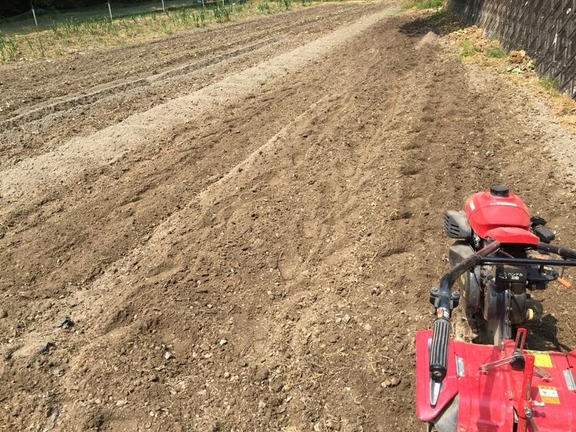 里芋ショウガの植え付け
