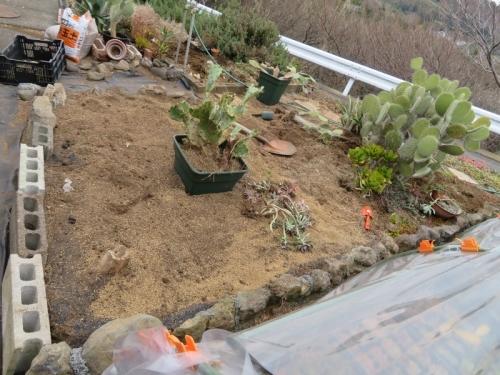 多肉、サボテン地植えコーナーの入れ替え、庭土の天地返し2019.03.19