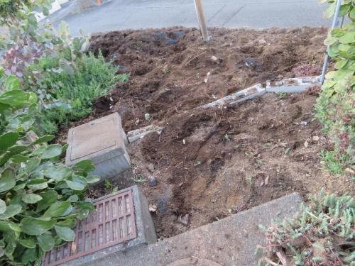 多肉、サボテン地植えコーナーの入れ替え、庭土の天地返し2019.03.20