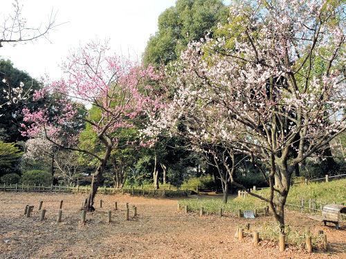 190314azabu19.jpg