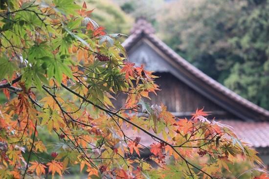 s-⑳紅葉の寺
