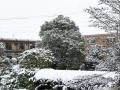 雪_2019_02_11-2