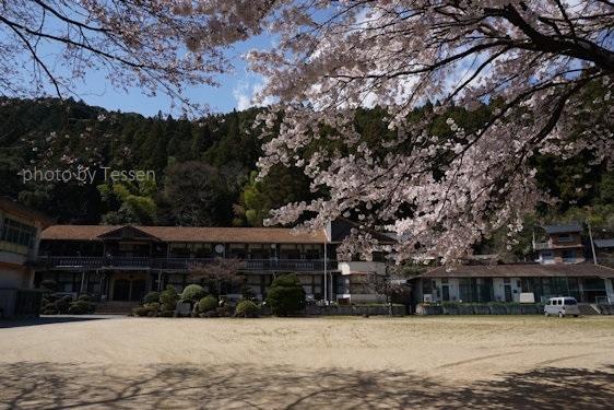 DSC03706桜