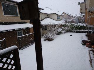 s20190331なごり雪
