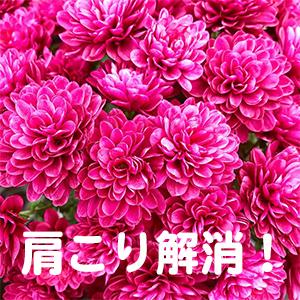 肩こり,大阪,豊中,高槻,茨木