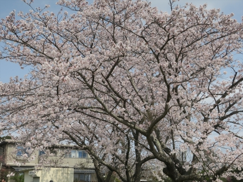 「村上地区花見会&ビンゴ大会」③_R