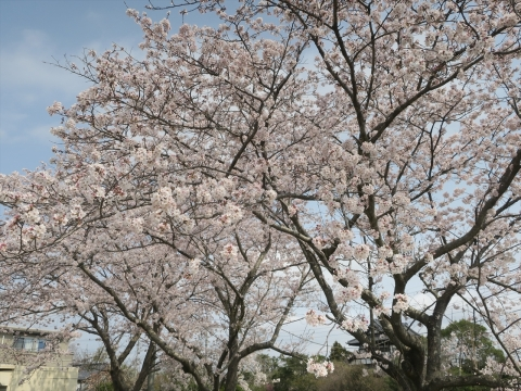 「村上地区花見会&ビンゴ大会」㊴_R