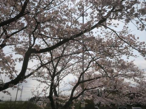 「村上地区花見会&ビンゴ大会」㊵_R
