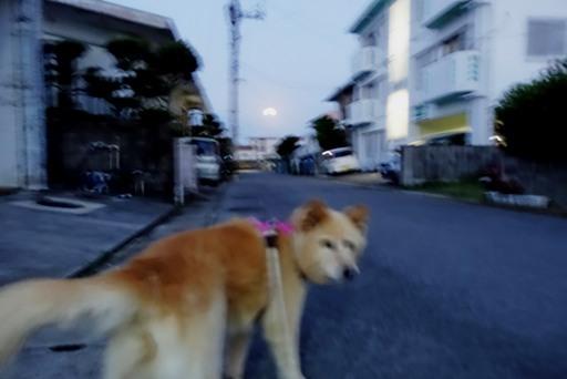 お散歩-d DSC00134