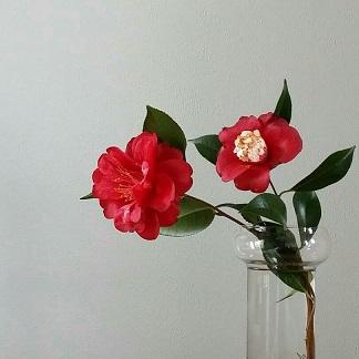 camelliabokuhan.jpg
