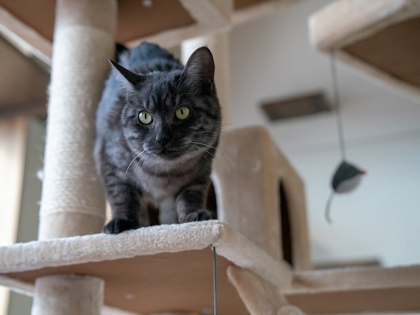 参加猫1番_先頭写真
