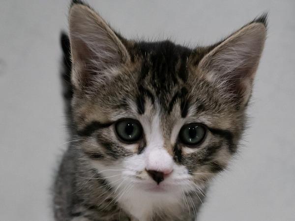 参加猫3番_先頭写真