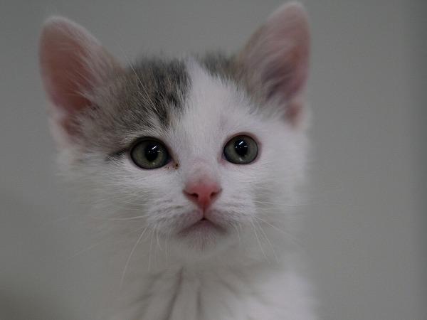 参加猫5番_先頭写真