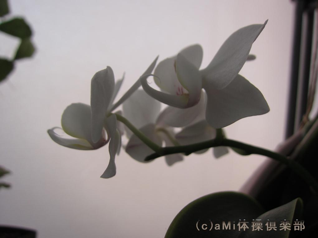 IMG_1482.jpg