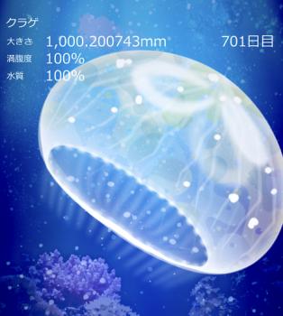 2019 0406 くらげ
