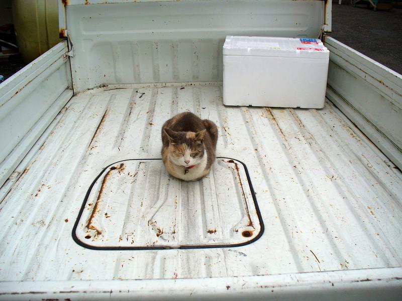 軽トラック荷台の猫1