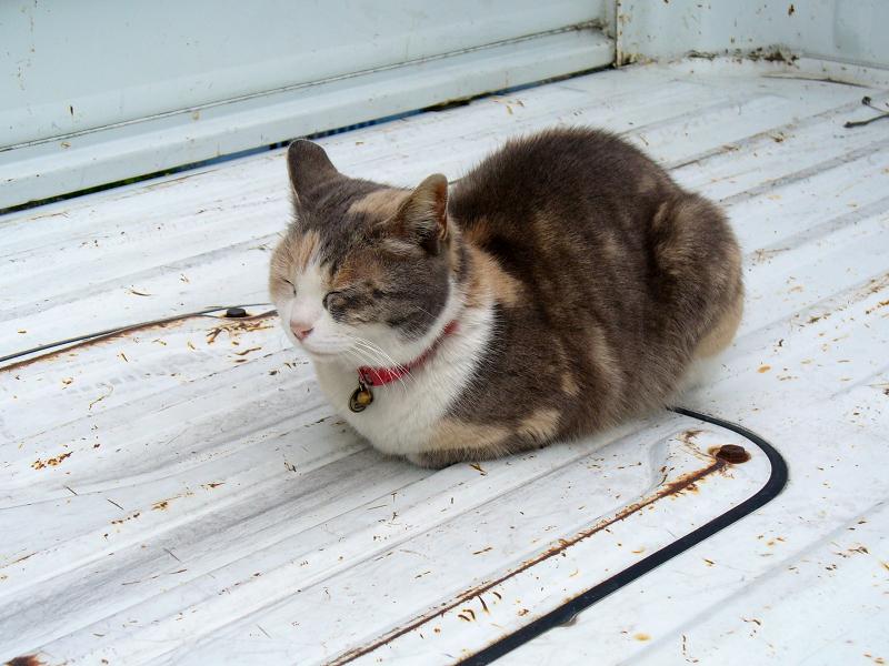 軽トラック荷台の猫2