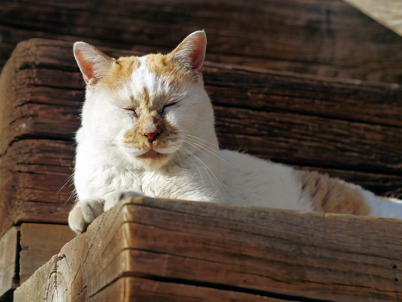 階段の端に座ってる白茶猫2