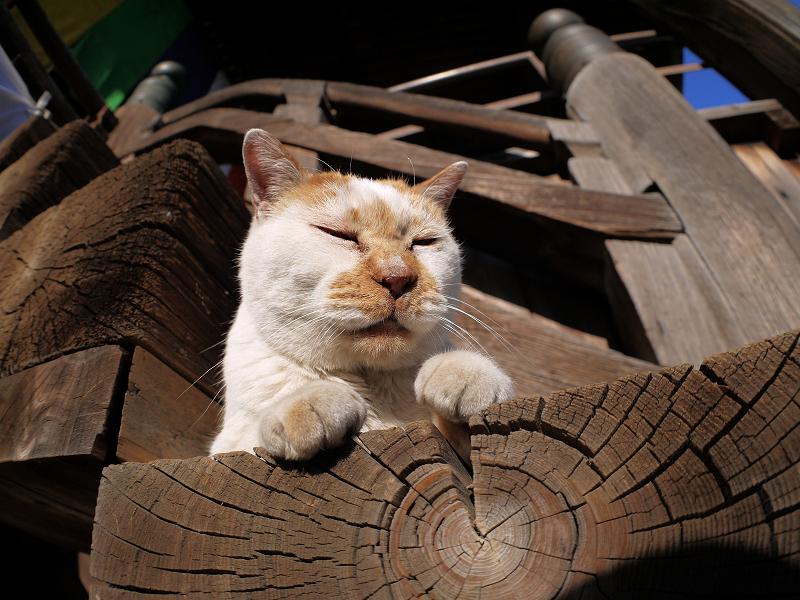 階段の端に座ってる白茶猫3