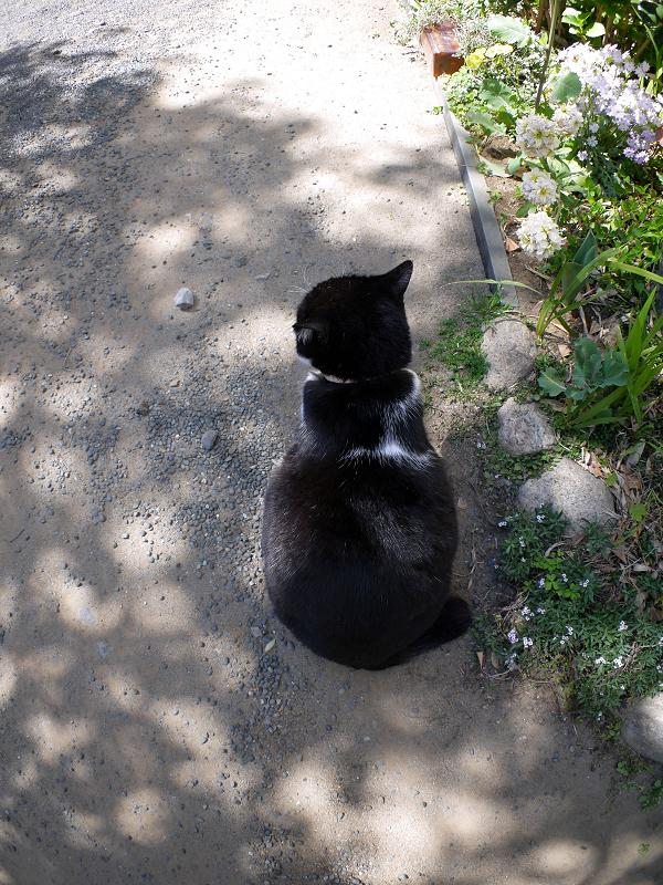 木漏れ日と黒白猫の背中1